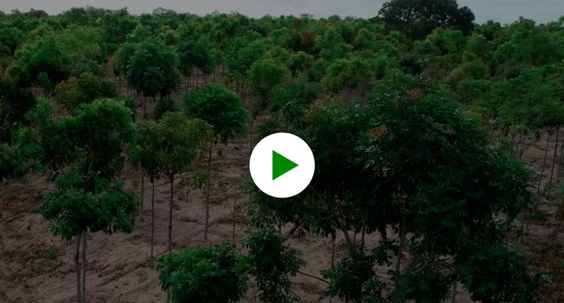 Vídeo insitucional Ouro Verde